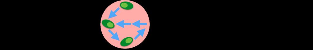 Heteromotility Logo