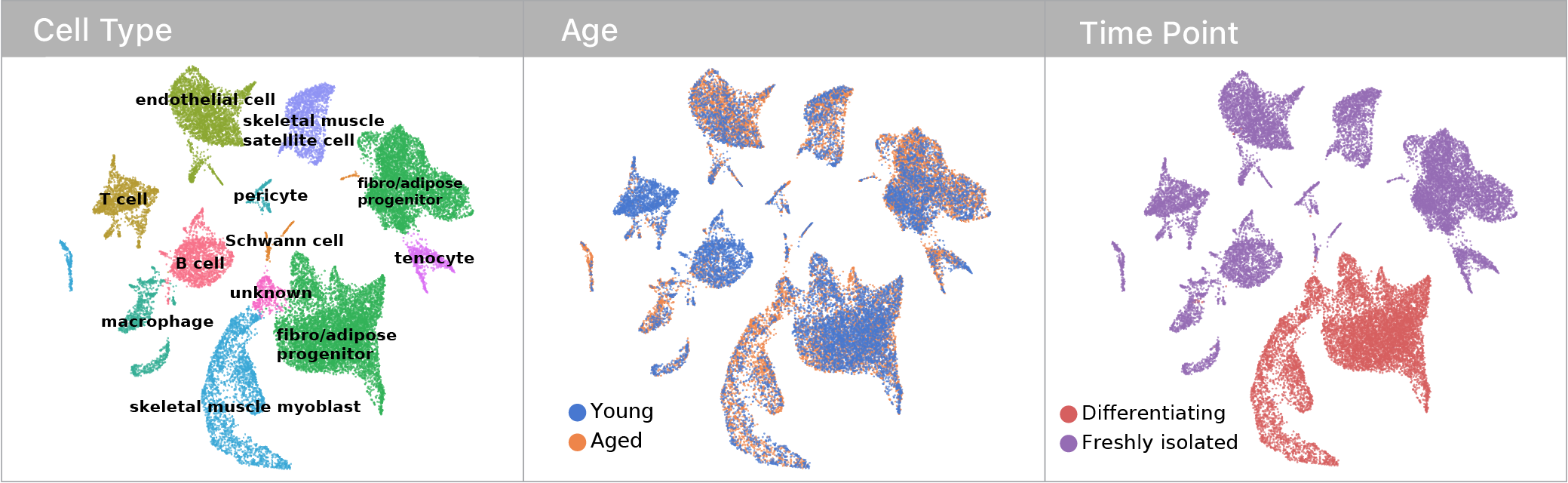 Single cell mRNA abundance profiles displayed in a UMAP projection colored by cell type