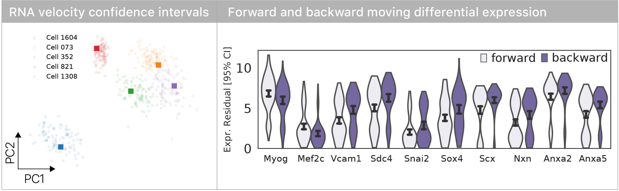 Myogenic determinants